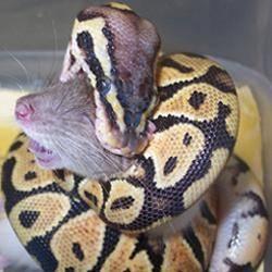 Om Snake hanteringsutrustning