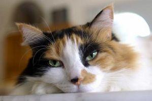 Vad kan jag sätta på möbler så att katter inte repar det?