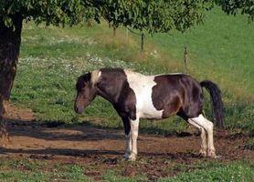 Vad är den bästa maten för din häst?