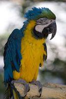 Bästa papegojor för nybörjare