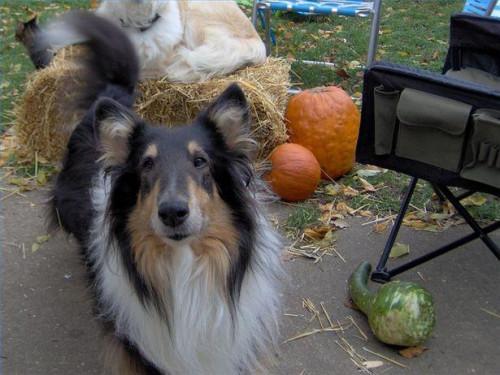 Växtbaserade behandlingar för bandmask hos hundar