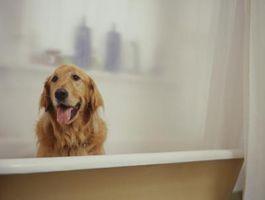 Hemgjord loppa & Tick skydd för hundar & katter