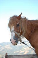 Hur man undervisar en häst till stopp när du använder raden utfall