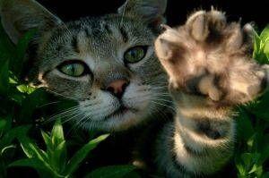Dödlig Cat sjukdomar