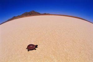 Hur till extraktet sköldpadda skelett