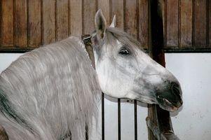Information om den andalusiska avel hästen