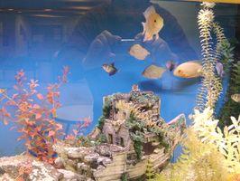 Hur bli av svart mossa från ett akvarium