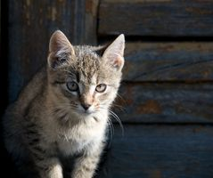Hur till stopp en katt med myggmedel