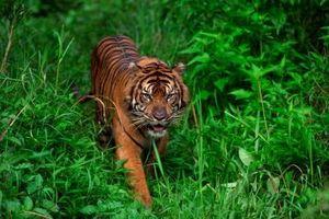 Hotade arter i naturen