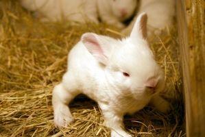Idéer för utomhus kanin burar