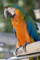 Exotisk fågel Information